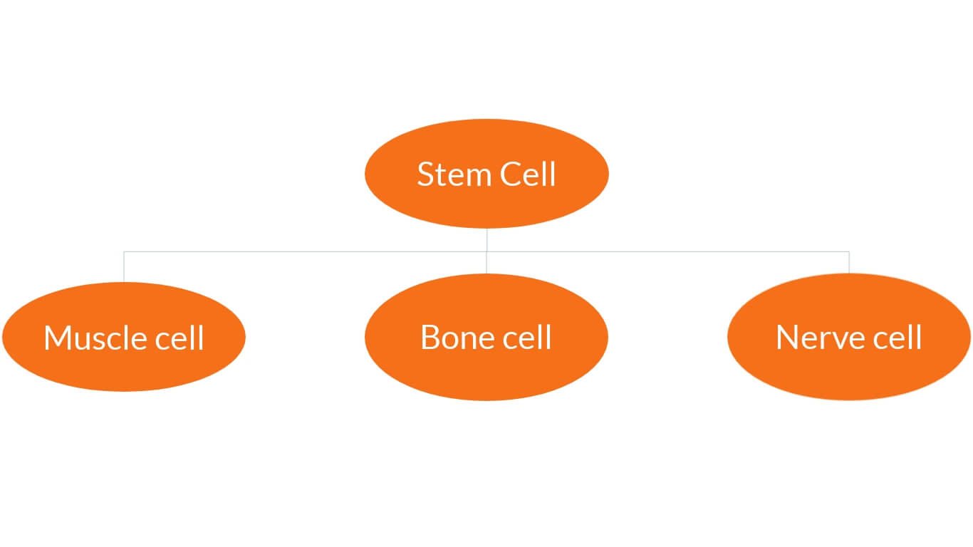 Stem Cell Therapy - Cellaxys